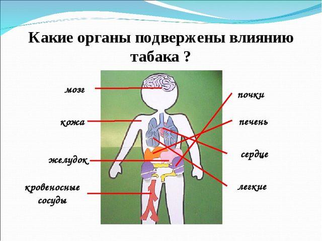 Какие органы подвержены влиянию табака ? мозг кожа желудок кровеносные сосуды...