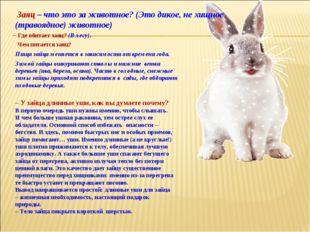 Заяц – что это за животное?(Это дикое, не хищное (травоядное) животное) – У