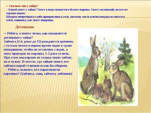 – Сколько лап у зайца? – Какой хвост у зайца? Хвост в виде пушистого белого ш
