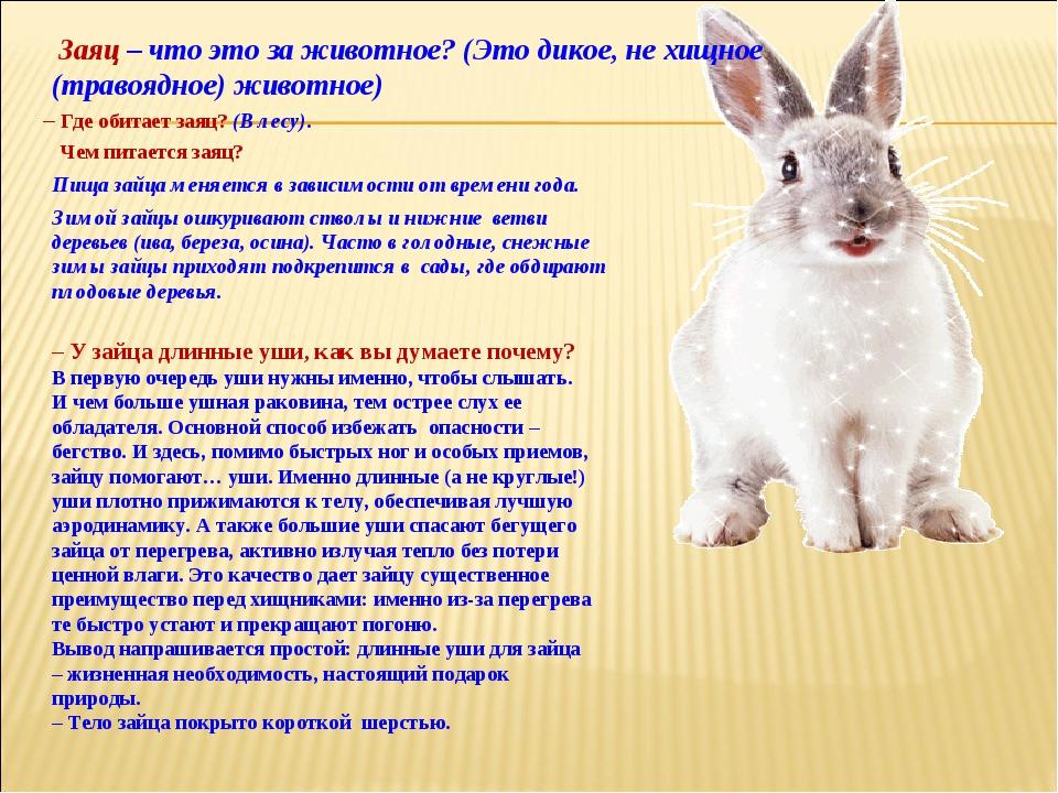 Заяц – что это за животное?(Это дикое, не хищное (травоядное) животное) – У...