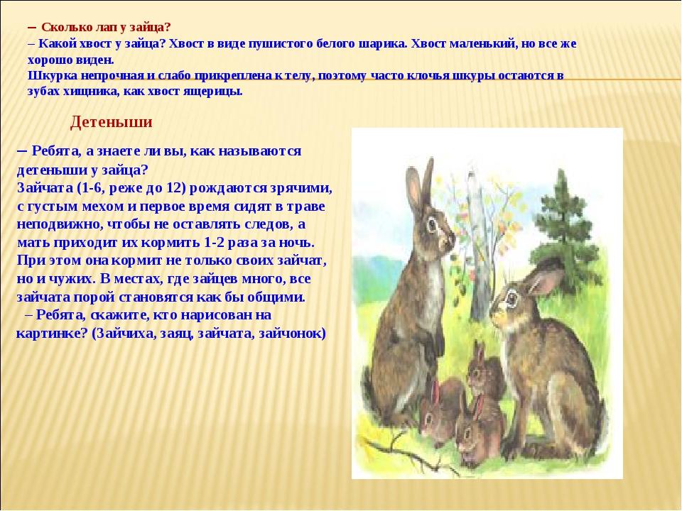 – Сколько лап у зайца? – Какой хвост у зайца? Хвост в виде пушистого белого ш...