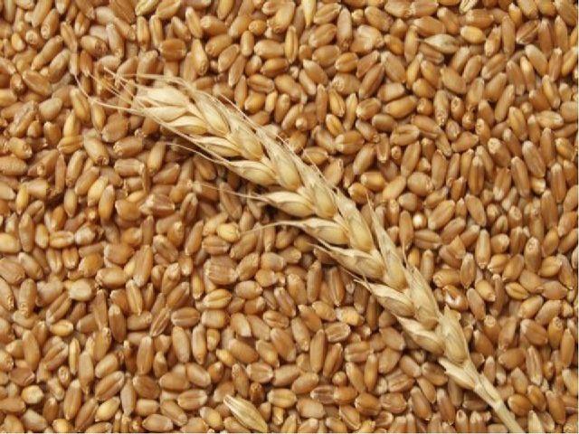 Об некоторых итогах работы за 9 месяцев 2017 года в сфере надзора  за качеством зерна и продуктов его переработки в Ивановской области