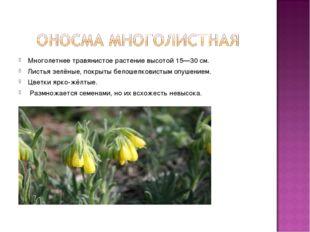 Многолетнеетравянистое растениевысотой 15—30 см. Листьязелёные, покрыты б