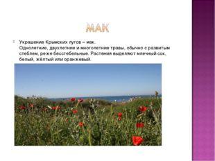 Украшение Крымских лугов – мак. Однолетние,двухлетниеимноголетниетравы, о