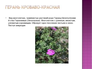 Видмноголетних,травянистыхрастенийродаГерань(Geranium)семей ства Герани