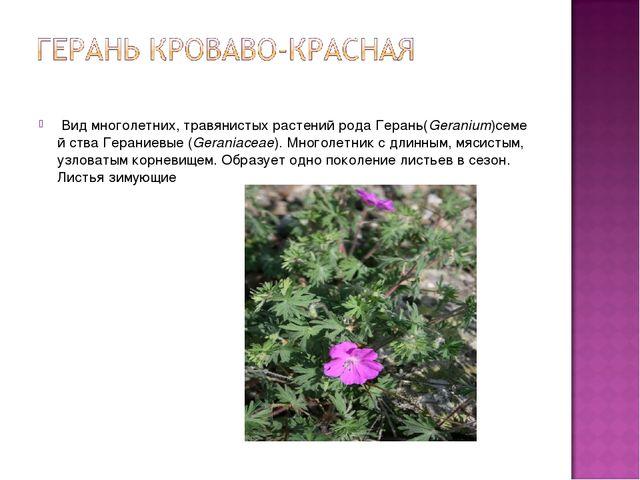 Видмноголетних,травянистыхрастенийродаГерань(Geranium)семей ства Герани...