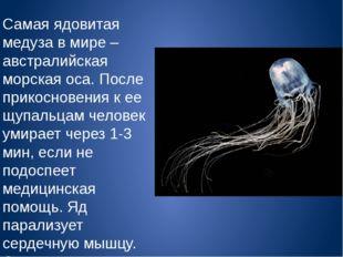 Самая ядовитая медуза в мире – австралийская морская оса. После прикосновения