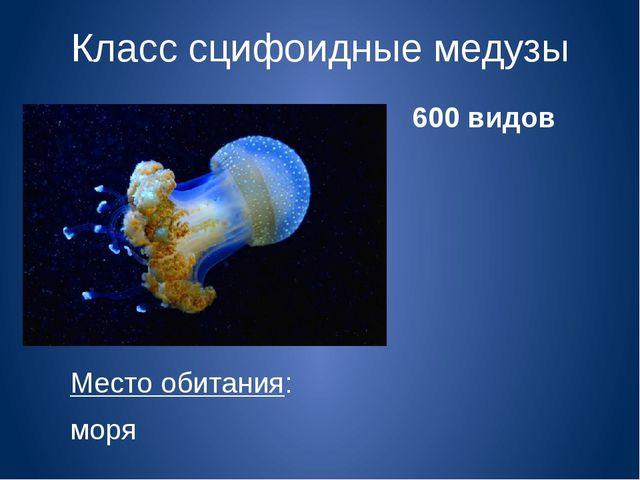 Класс сцифоидные медузы Место обитания: моря 600 видов