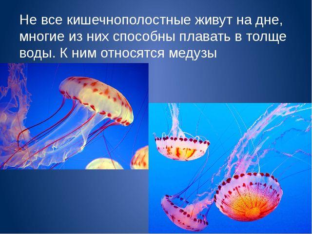Не все кишечнополостные живут на дне, многие из них способны плавать в толще...