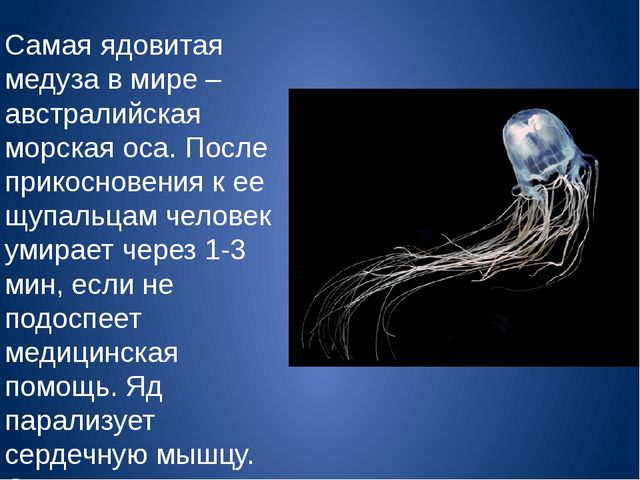 Самая ядовитая медуза в мире – австралийская морская оса. После прикосновения...