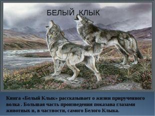 БЕЛЫЙ КЛЫК Книга «Белый Клык» рассказывает о жизни прирученного волка . Больш
