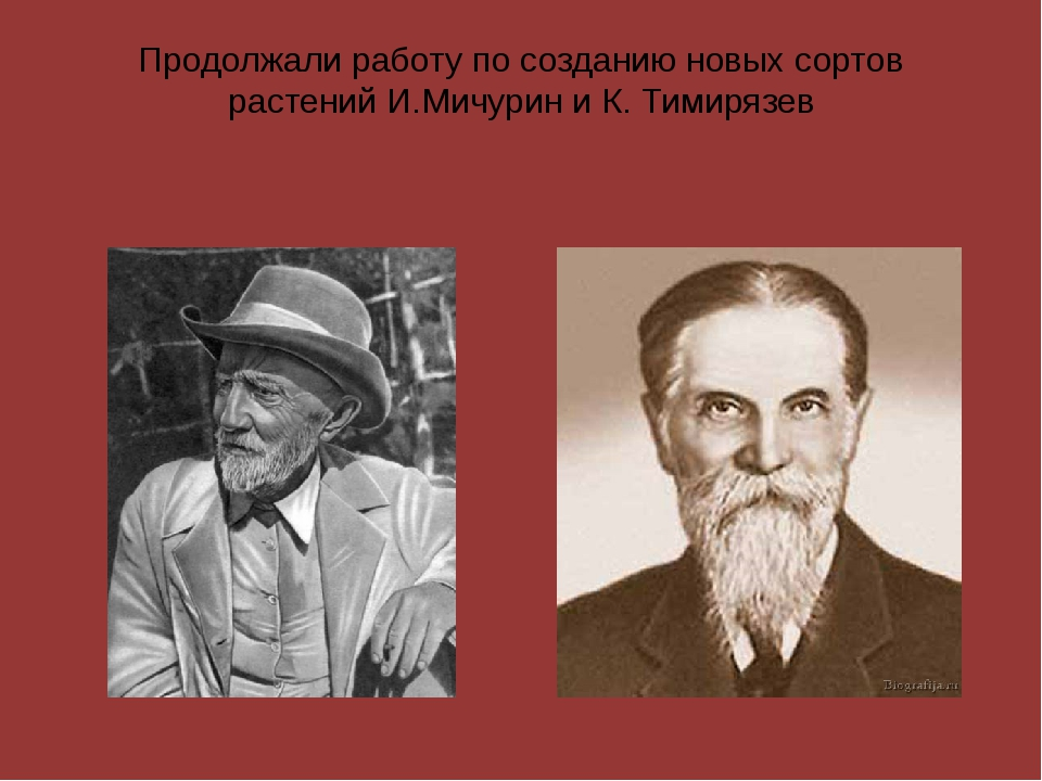 Продолжали работу по созданию новых сортов растений И.Мичурин и К. Тимирязев