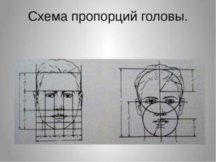 Схема пропорций головы.