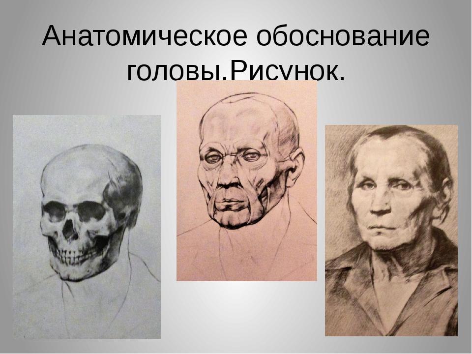 Анатомическое обоснование головы.Рисунок.