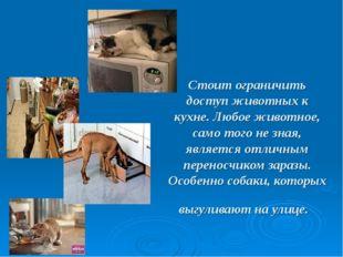 Стоит ограничить доступ животных к кухне. Любое животное, само того не зная,