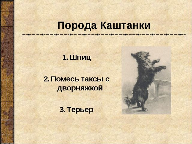 Порода Каштанки Шпиц Помесь таксы с дворняжкой Терьер