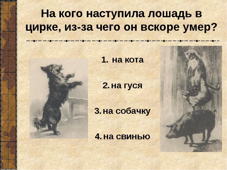 на кота на гуся на собачку на свинью На кого наступила лошадь в цирке, из-за...