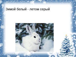 Зимой белый - летом серый