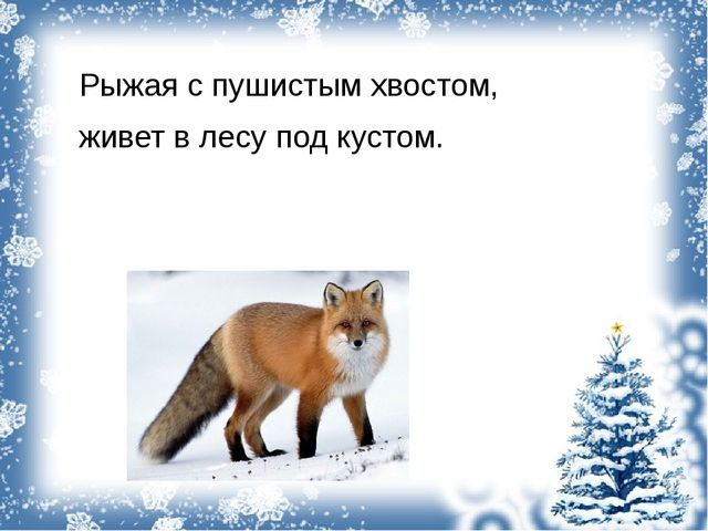 Рыжая с пушистым хвостом, живет в лесу под кустом.