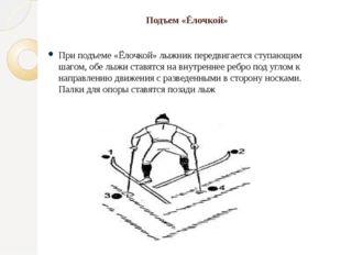 Подъем «Ёлочкой» При подъеме «Ёлочкой» лыжник передвигается ступающим шагом,