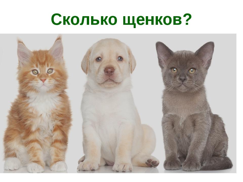 Сколько щенков?