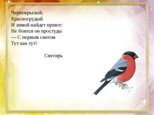 Чернокрылый, Красногрудый И зимой найдет приют: Не боится он простуды — С пе