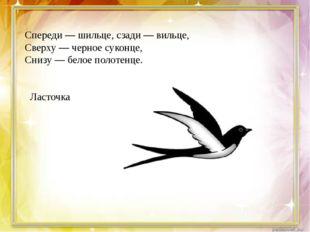 Спереди — шильце, сзади — вильце, Сверху — черное суконце, Снизу — белое пол