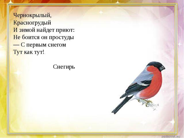Чернокрылый, Красногрудый И зимой найдет приют: Не боится он простуды — С пе...