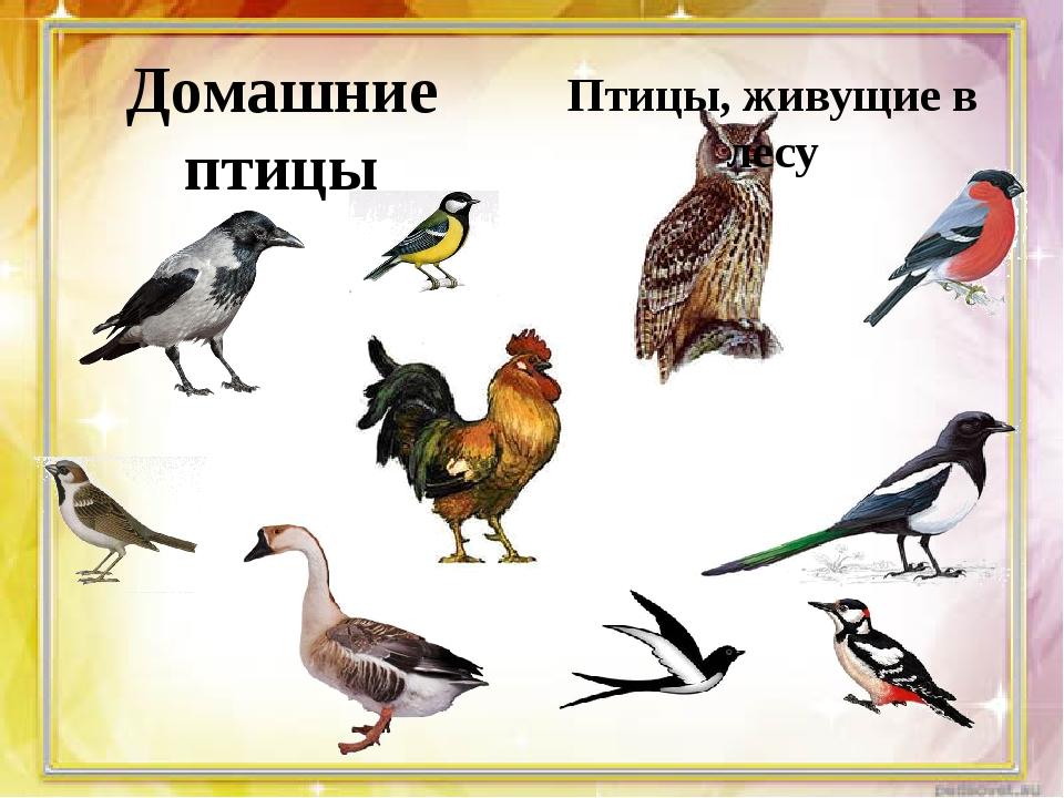 Домашние птицы Птицы, живущие в лесу