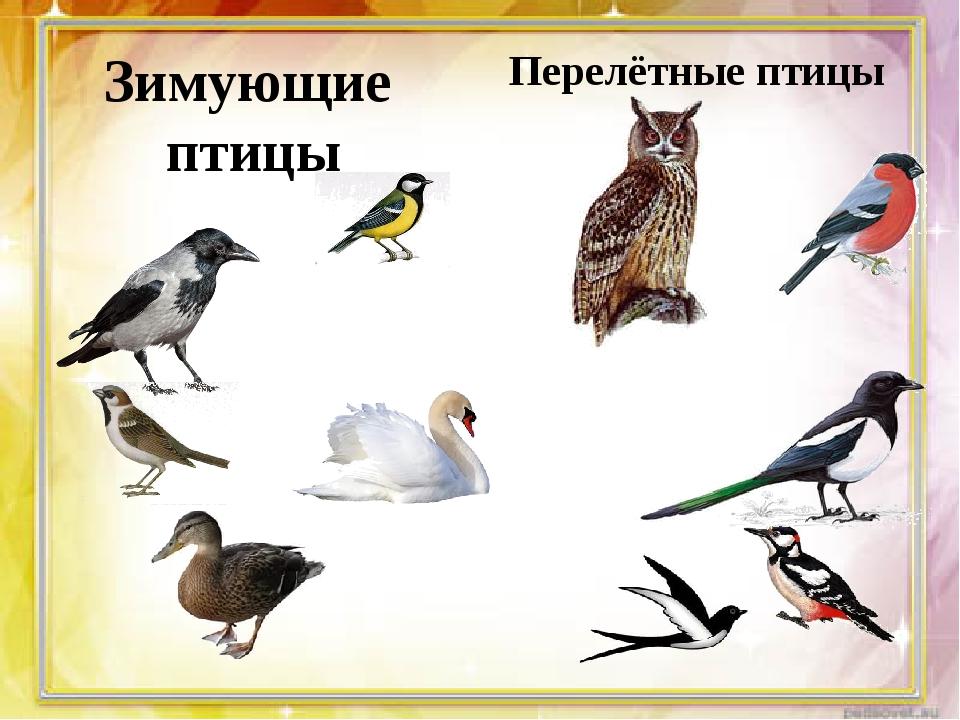 Зимующие птицы Перелётные птицы
