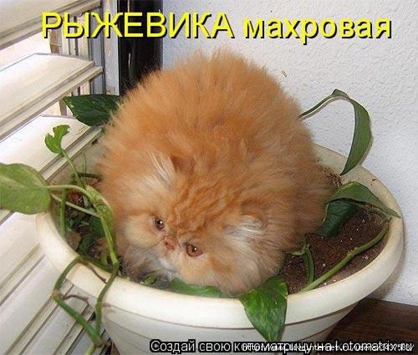 hello_html_140ec2d0.jpg