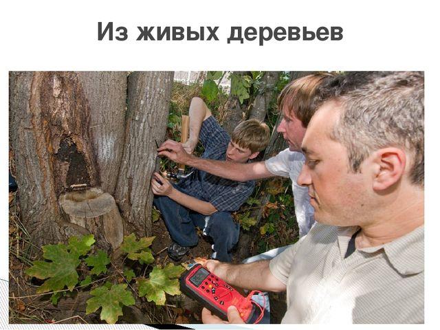 Из живых деревьев