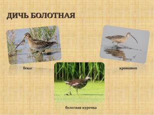 ДИЧЬ БОЛОТНАЯ бекас кроншнеп болотная курочка
