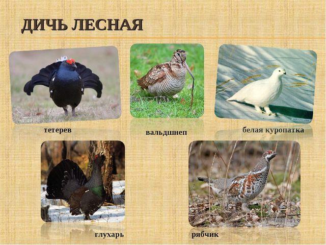 ДИЧЬ ЛЕСНАЯ рябчик тетерев глухарь белая куропатка вальдшнеп