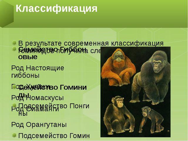 В результате современная классификация гоминидов получиласледующий вид: Семе...