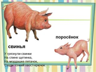 свинья У грязнули-свинки На спине щетинка, На мордашке пятачок, Сзади тонкий