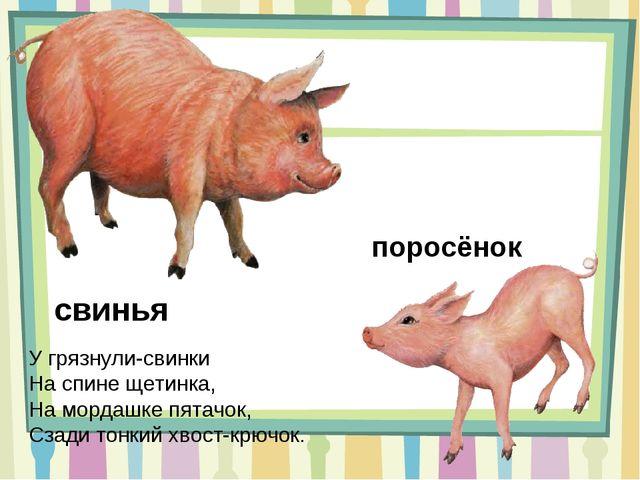 свинья У грязнули-свинки На спине щетинка, На мордашке пятачок, Сзади тонкий...