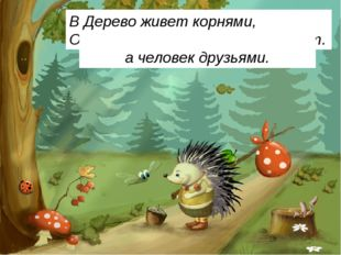 Весной веселит, летом холодит, Осенью питает, зимой согревает. Дерево живет к