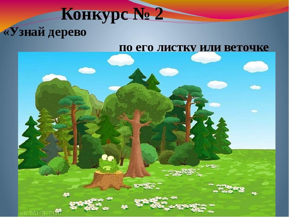Конкурс № 2 «Узнай дерево по его листку или веточке