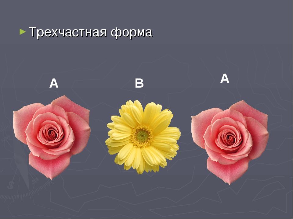 Трехчастная форма A B A