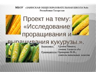 Проект на тему: «Исследование проращивания и выращивания кукурузы.». . МБОУ «