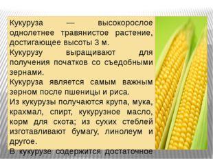 . Кукуруза — высокорослое однолетнее травянистое растение, достигающее высоты