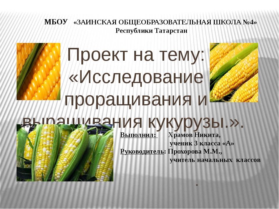 Проект на тему: «Исследование проращивания и выращивания кукурузы.». . МБОУ «...