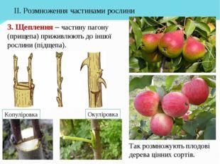 3. Щеплення – частину пагону (прищепа) приживлюють до іншої рослини (підщепа)