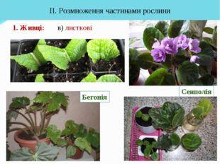 1. Живці: ІІ. Розмноження частинами рослини Сенполія в) листкові Бегонія