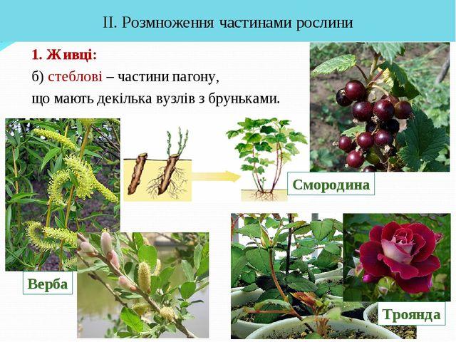1. Живці: б) стеблові – частини пагону, що мають декілька вузлів з бруньками....