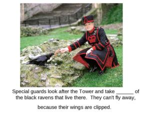 Special guards look after the Tower and take ______ of the black ravens that