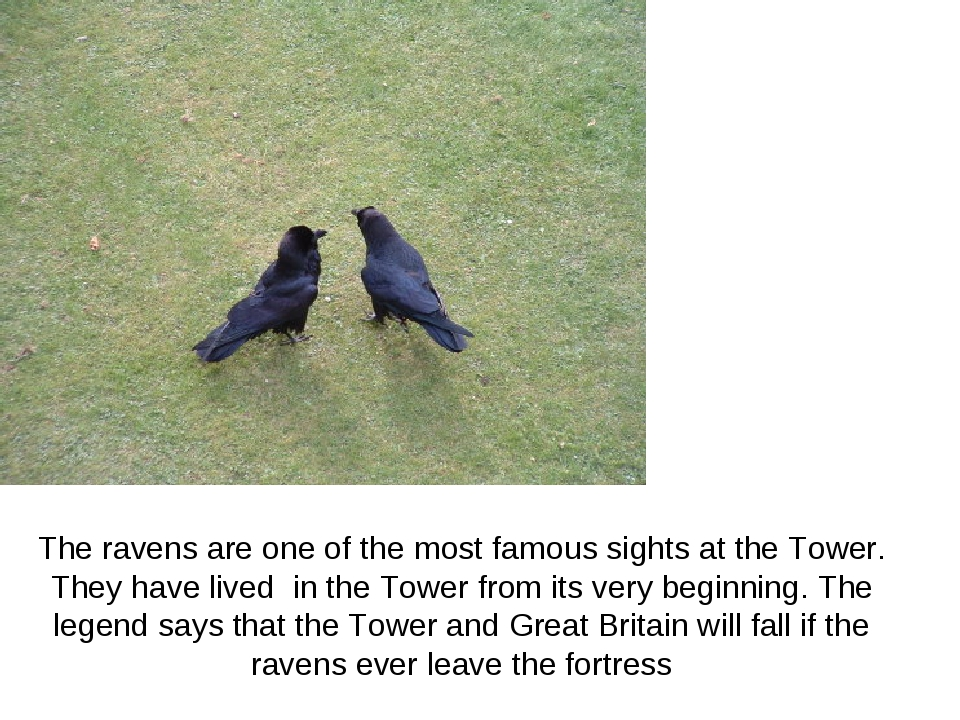 The ravens are one of the most famous sights at the Tower. They have lived in...