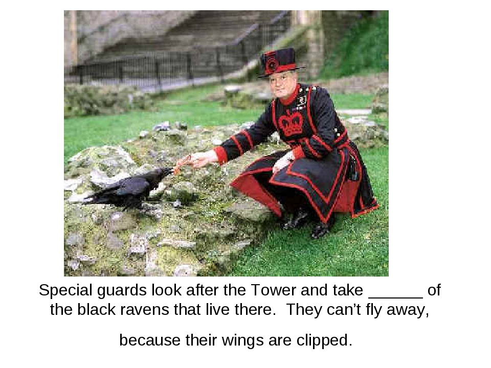 Special guards look after the Tower and take ______ of the black ravens that...