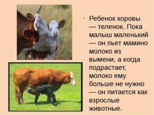 Ребенок коровы — теленок. Пока малыш маленький — он пьет мамино молоко из вы